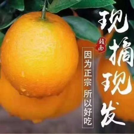 老家的赣南脐橙